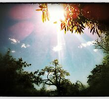 sunrays through the trees by sebastian