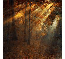 shining forest Photographic Print