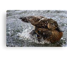 ducks behaving badly Canvas Print