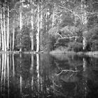 Sanatorium Lake by Christine  Wilson Photography