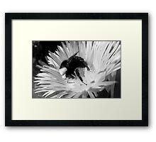 #996 Framed Print