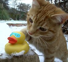 Kitten with his friend  by heather1990