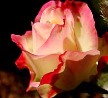 Fall Roses II by Tricia Stucenski