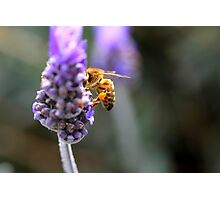 """""""Too Buzzy to Pose"""" Photographic Print"""