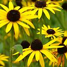 Golden Coneflowers by KPrecious