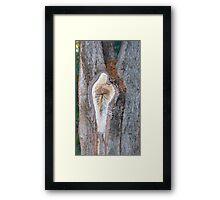 Nature's Spirit  Framed Print