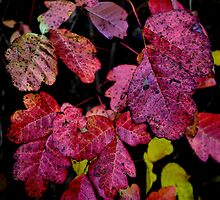 Itching For Fall by Charles & Patricia   Harkins ~ Picture Oregon