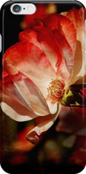 Rose iPhone Case by Lisa Knechtel