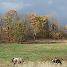 Grazing Under Stormy Skies by Tracy Faught