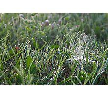 Morning grass Photographic Print