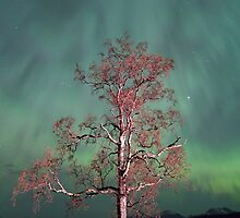 Tree & Aurora Borealis -III by Frank Olsen