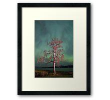 Tree & Aurora Borealis -III Framed Print