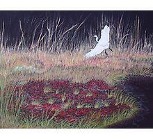 """Heron Over Autumn Marsh"" Photographic Print"