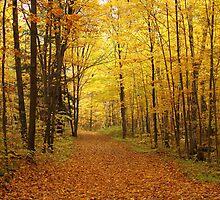 Tree Alley into the Fall by Alinka