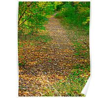 Leaf ground cover Poster