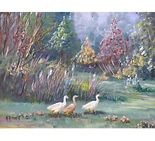 Goose and Gander Photographic Print