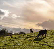 Evening Sky by lynn carter