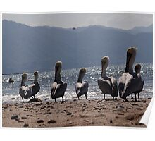 Pelicans with the mountains of the Sierra Madre as background Poster