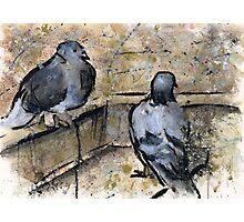 Pigeons #3 Photographic Print