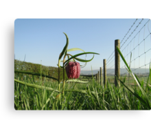 Snake's head Fritillary Canvas Print