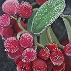Winter Berries by TepeeArt