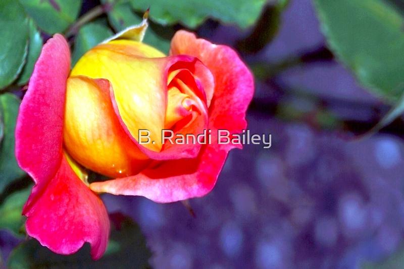 Richly hued rose by ♥⊱ B. Randi Bailey