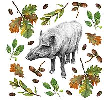 Wild boar with oak leaves Photographic Print