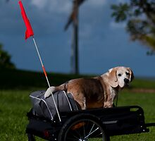 Beagle by the Bay by David Baird