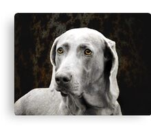 The Soulful Eyes of the Weimaraner Canvas Print
