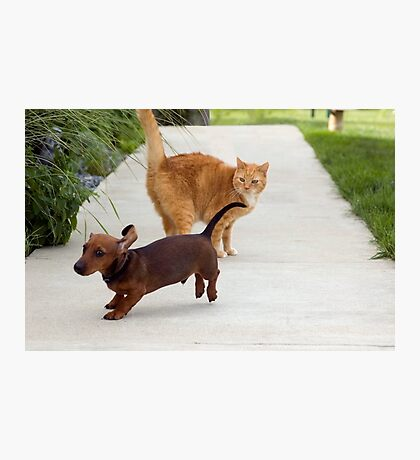 Looks Like I Mighta' Picked The Wrong Day For A Cat Fight Photographic Print