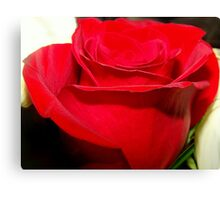 A RUBY RED ROSE Canvas Print