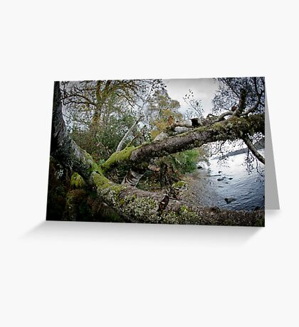 Loch Ness Shoreside Greeting Card