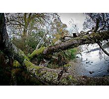 Loch Ness Shoreside Photographic Print