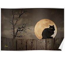 Cat On A Fence Poster