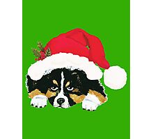Black Tri Australian Shepherd Christmas Puppy Photographic Print