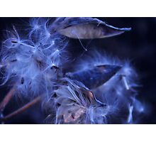 Whispers Photographic Print