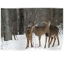 Deer Affection Poster