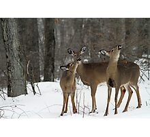 Deer Affection Photographic Print