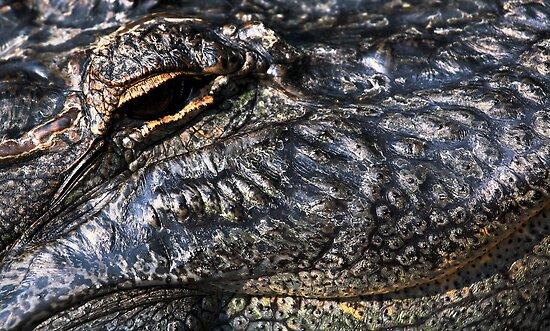 Gator Eye by Karol Livote