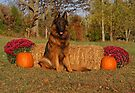 Hoss in Autumn II by Sandy Keeton