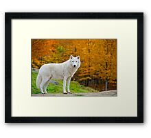 Arctic Fall  Framed Print