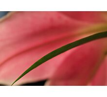 Soft Pink Lily 3 Photographic Print