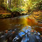 Autumn Stream by lee Henley