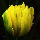 Yellow Tulip by Mattie Bryant