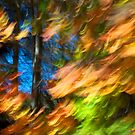 Fall No. 2 - 2011 by Joseph Rotindo