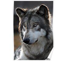 back light wolf Poster