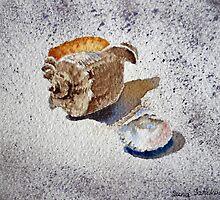Sea Shell on a Rock by Irina Sztukowski