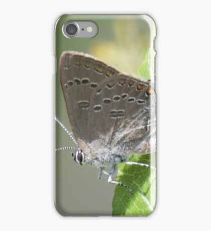 Edwards' Hairstreak iPhone Case/Skin