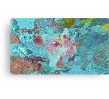 PURPLE PINK FROGFISH Canvas Print