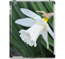 Single White Daffodil iPad Case/Skin